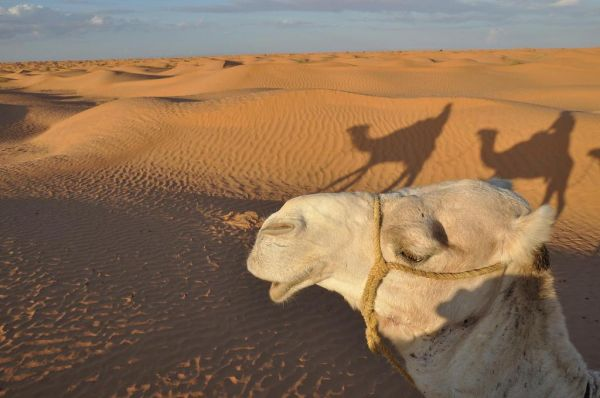 Ali Babina pustolovina na Djerbi****